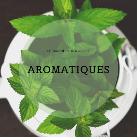 Aromatiques