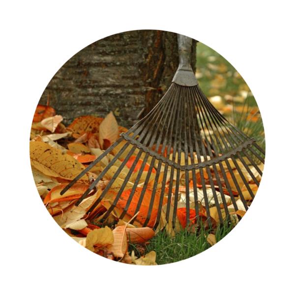 Almanach 2019 : Que faire en octobre dans votre jardin ?