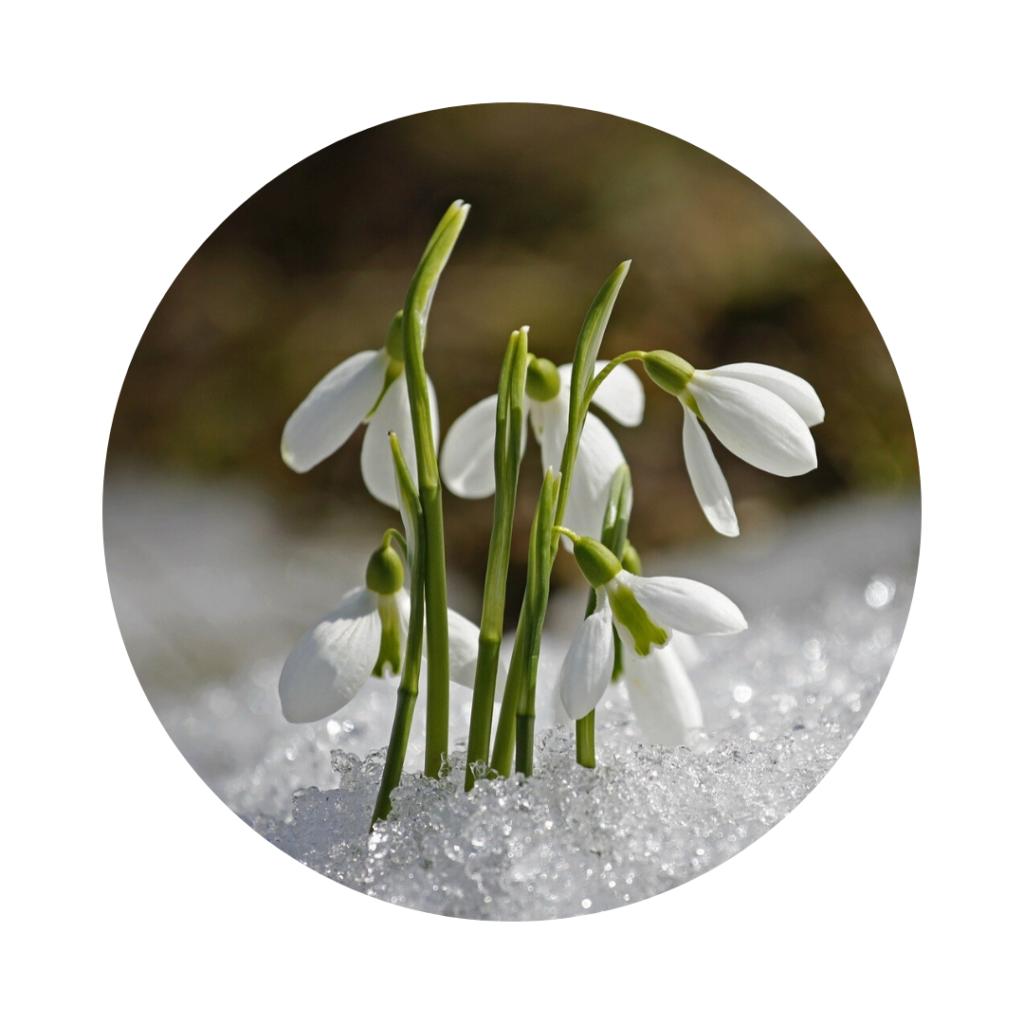 Almanach 2020 - Février dans vos jardins