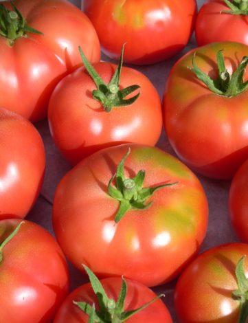 plant tomate rose de berne
