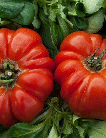 plant tomate coeur de boeuf