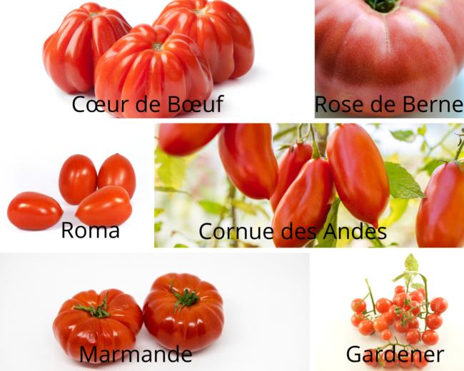 collection de tomates anciennes
